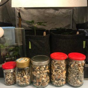Mushrooms in jars